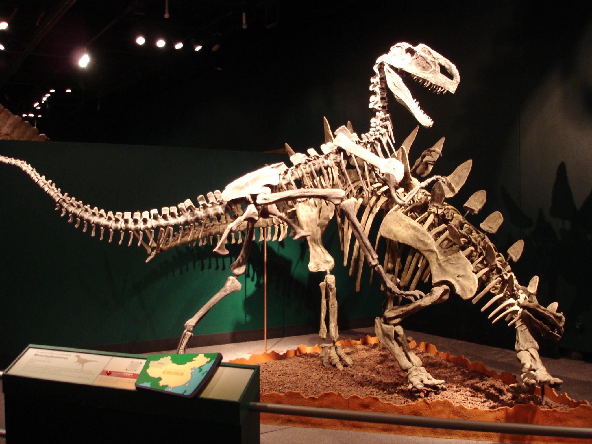 Natural History Vs High Thoughput