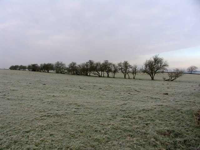 Frosty sheep in a frosty field - geograph.org.uk - 332840.jpg