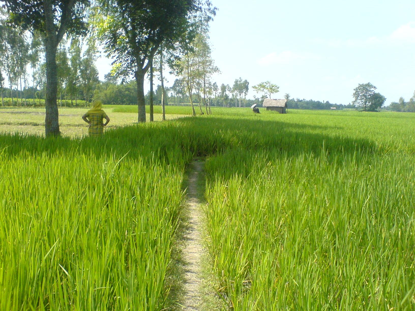 File:Green Field In Bangladesh.jpg