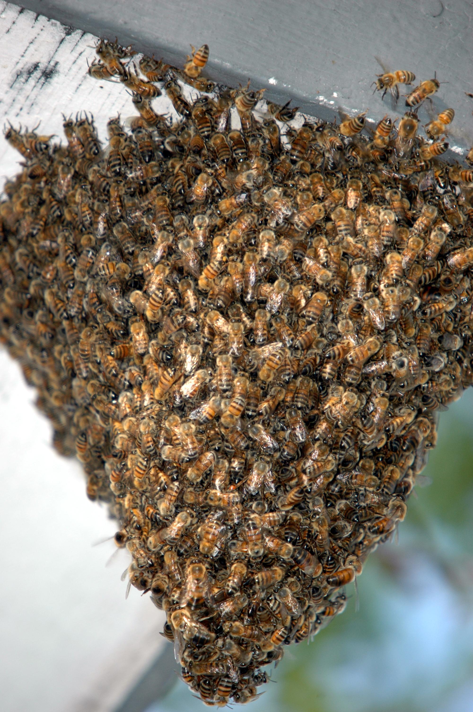 Diagram Of A Honeycomb Diagram Of A Butterflies ~ Elsavadorla - photo#10