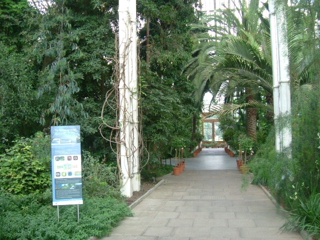 File Inside The Temperate House Kew Gardens Geograph Org Uk