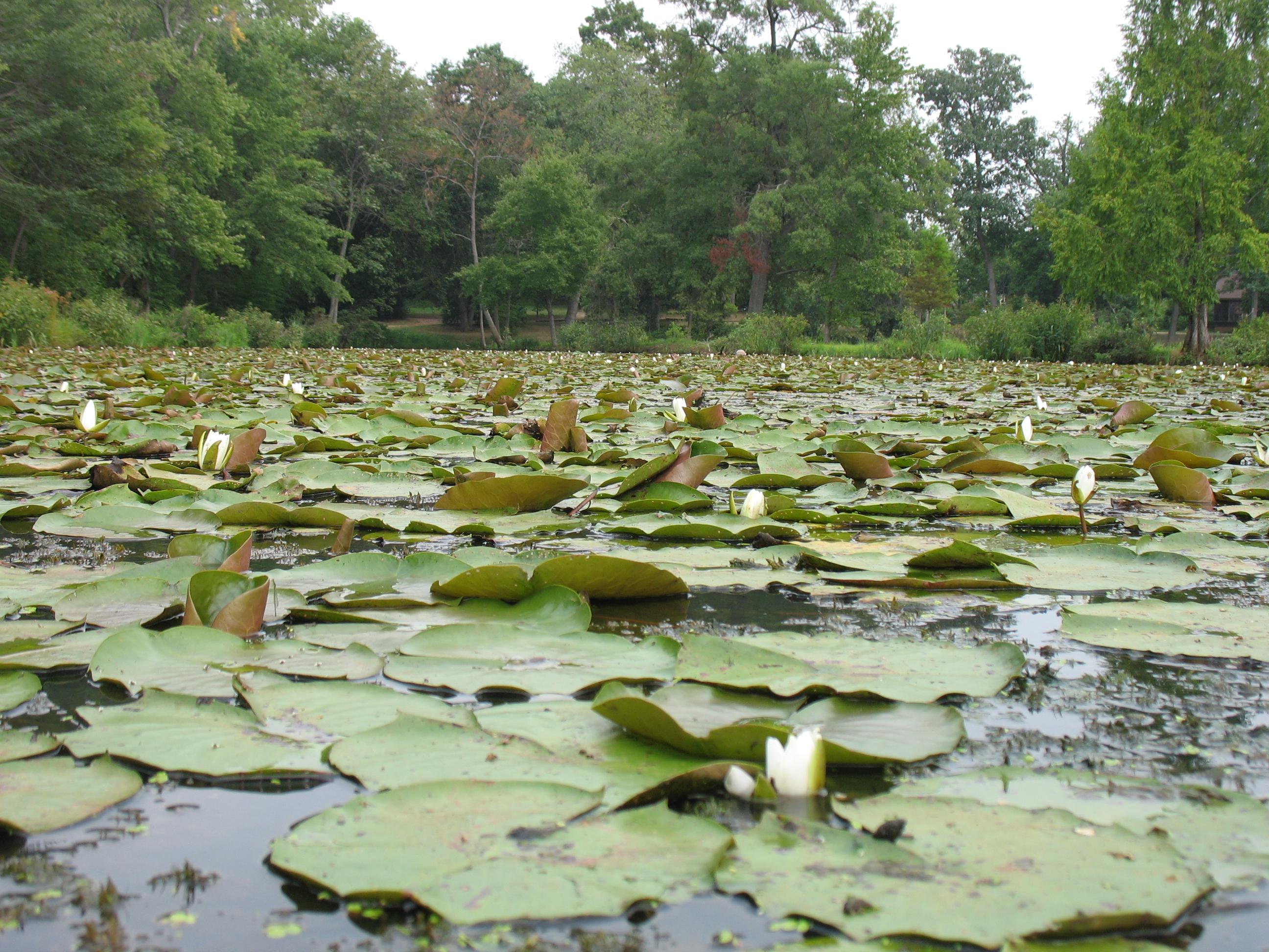 FileKenilworth Aquatic Gardens g Wikimedia mons