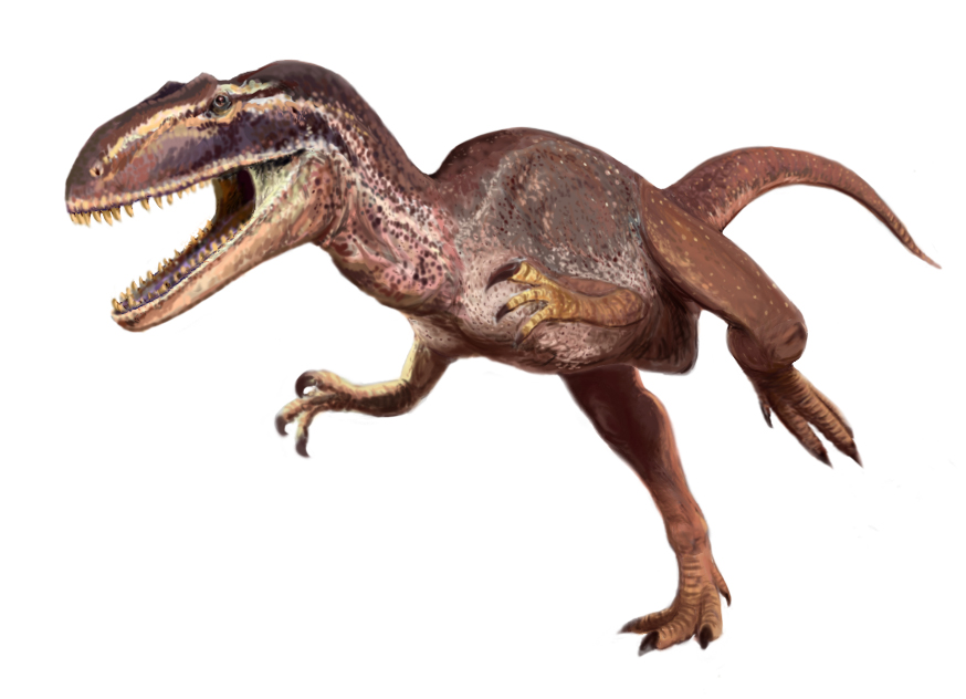 Metriacanthosaurus Metriacanthosaurus - W...