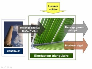 The Green Machine: Algae Clean Wastewater, Convert to Biodiesel