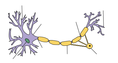 Neuron CNS - no labels.png