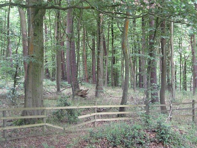 North Wood , Pollok Park - geograph.org.uk - 1543450