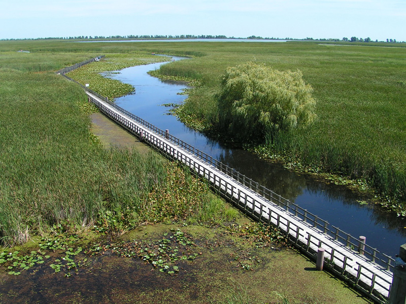 marshes and boardwalk in point pelee national park, southern ontario