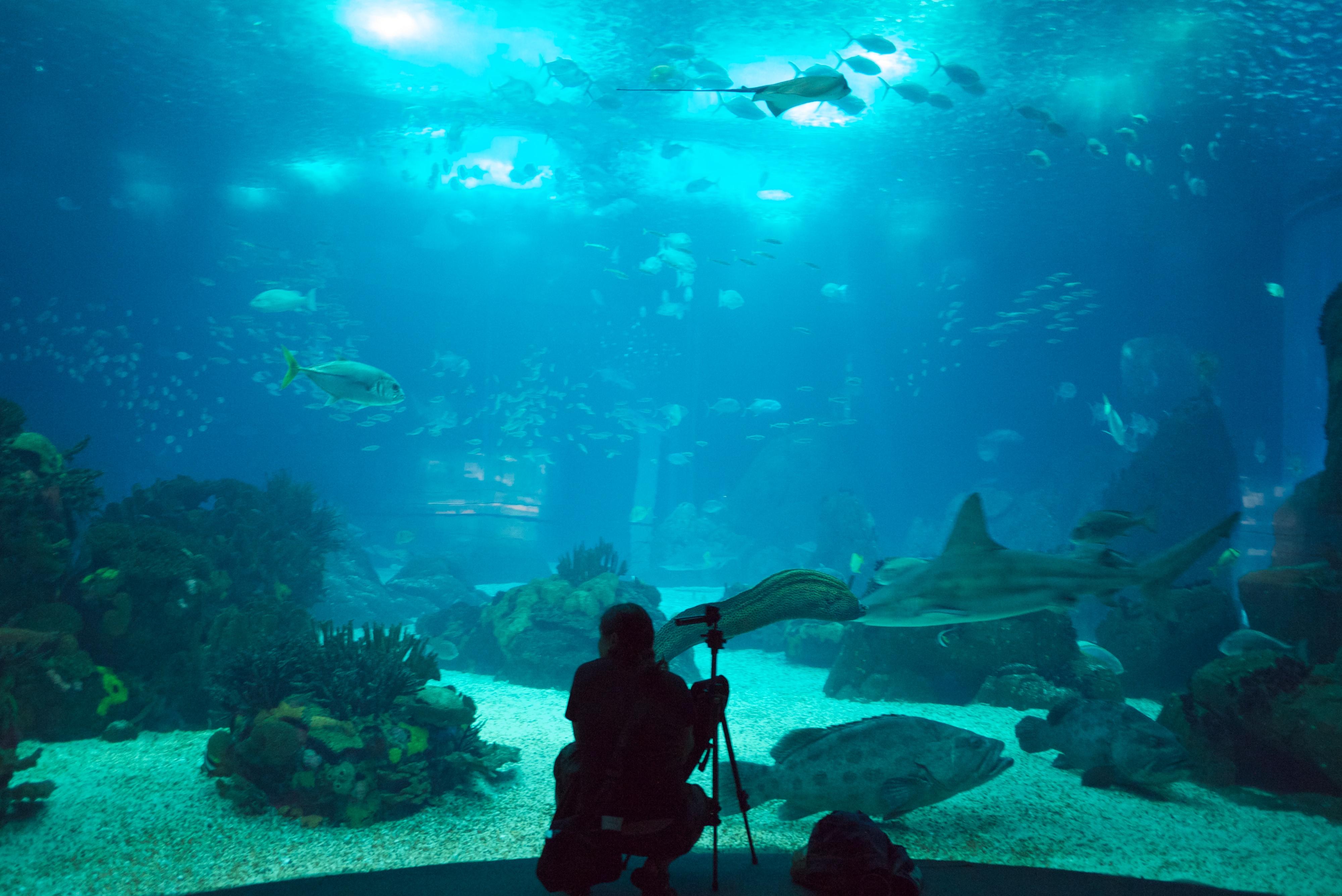 Portugal Aquarium