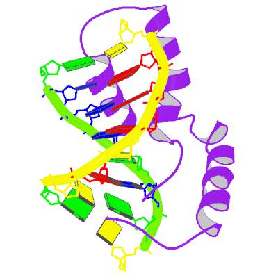 https://upload.wikimedia.org/wikipedia/commons/6/6d/PBB_Protein_SRY_image.jpg