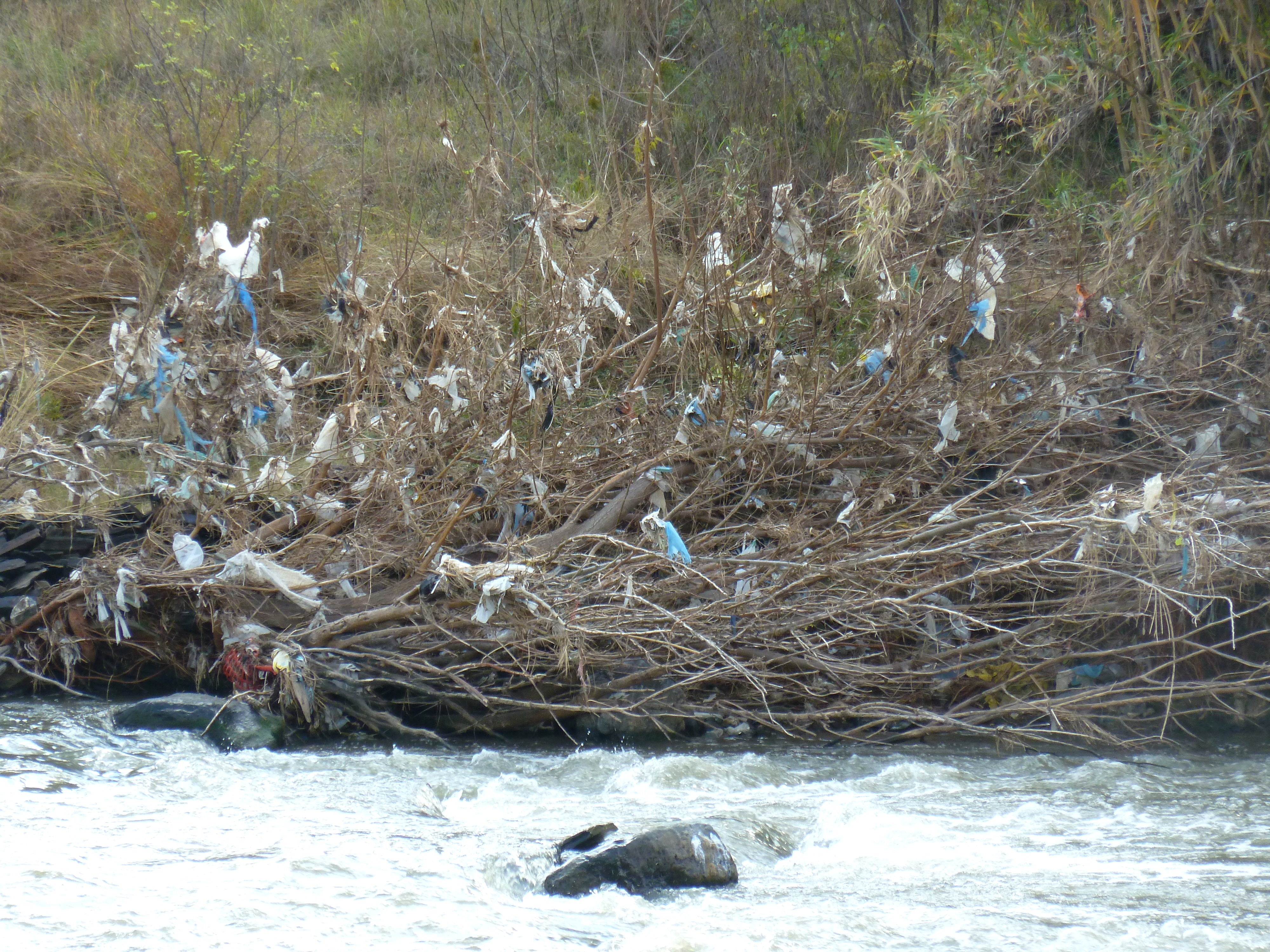 File:Plastic_bag_litter_in_Crocodile_river,_Pelindaba on Ocean Animals