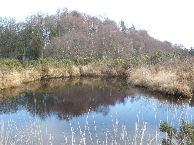 Pond, on Aylesbeare Common - geograph.org.uk - 1130179