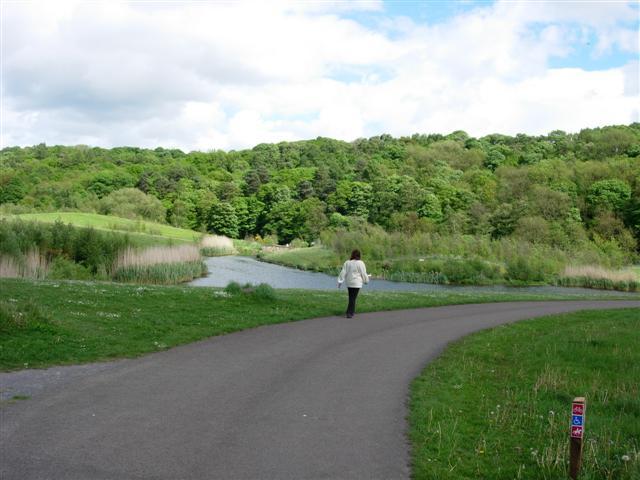 Pond in Derwent Walk Country Park - geograph.org.uk - 176113