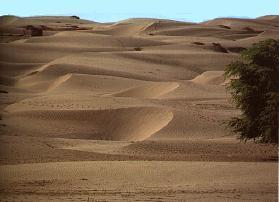 Sechuran aavikko