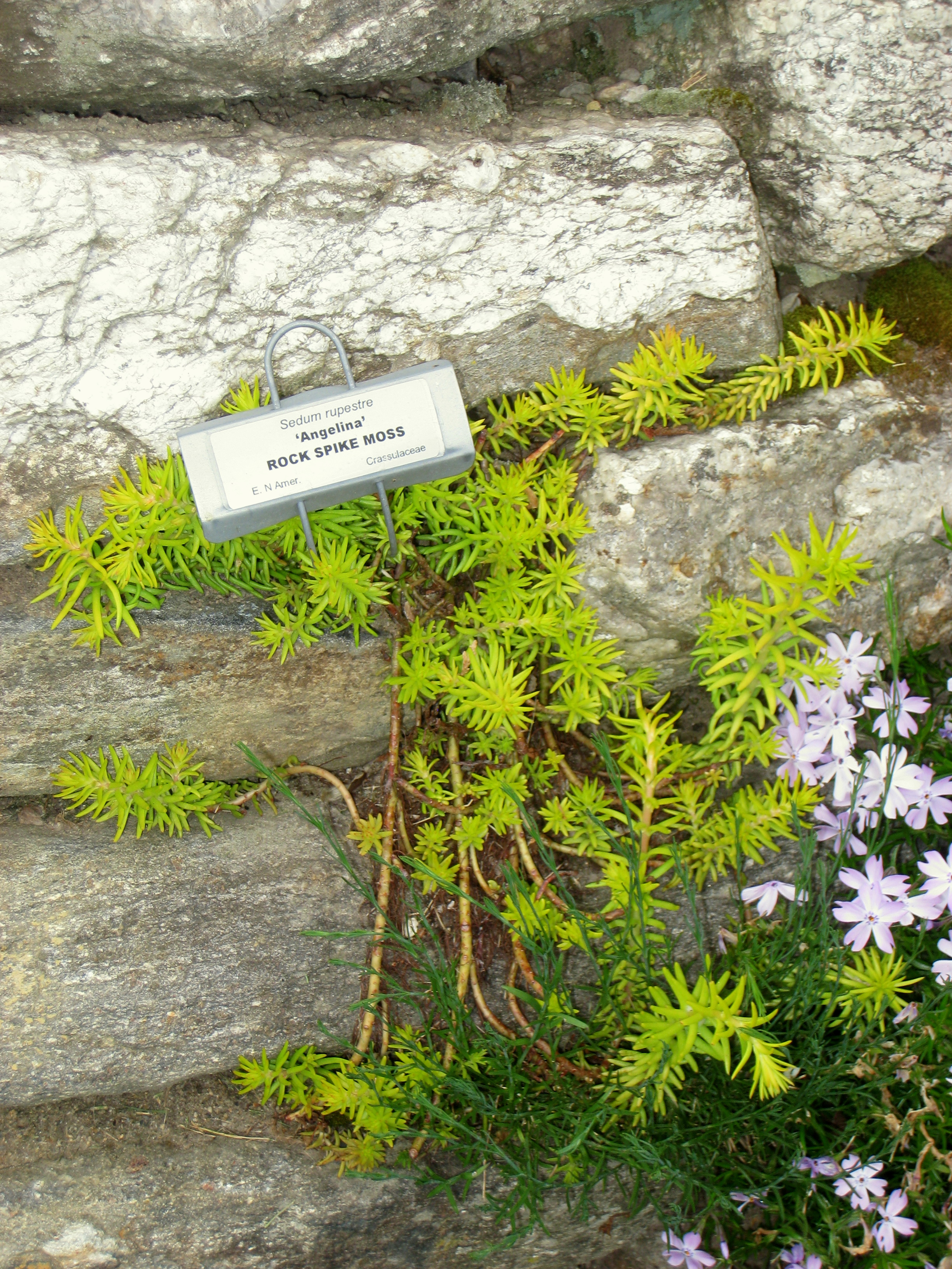 Image Result For Tower Hill Botanic Garden
