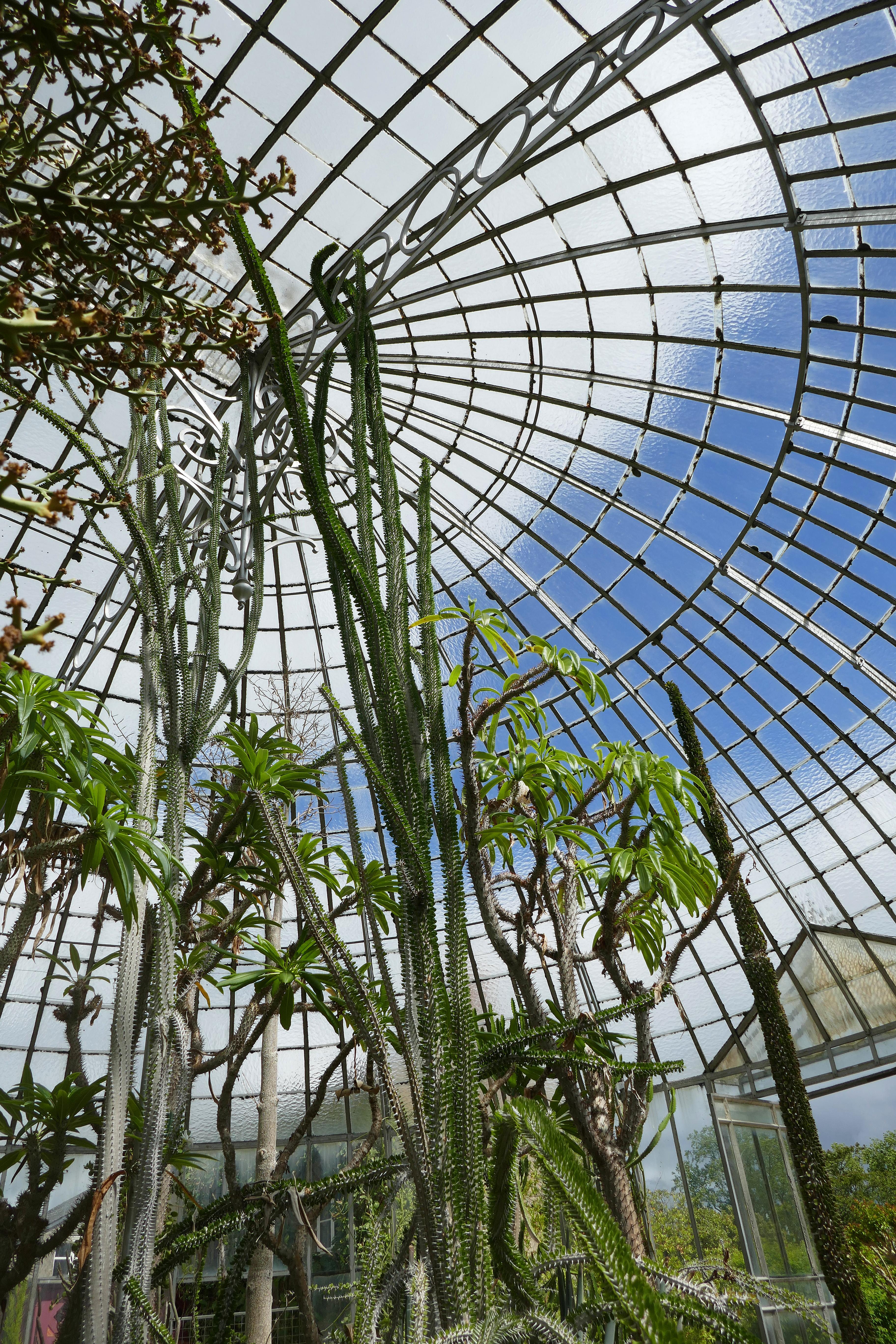 File:Serre des milieux arides-Jardin des plantes de Nantes (12).jpg ...
