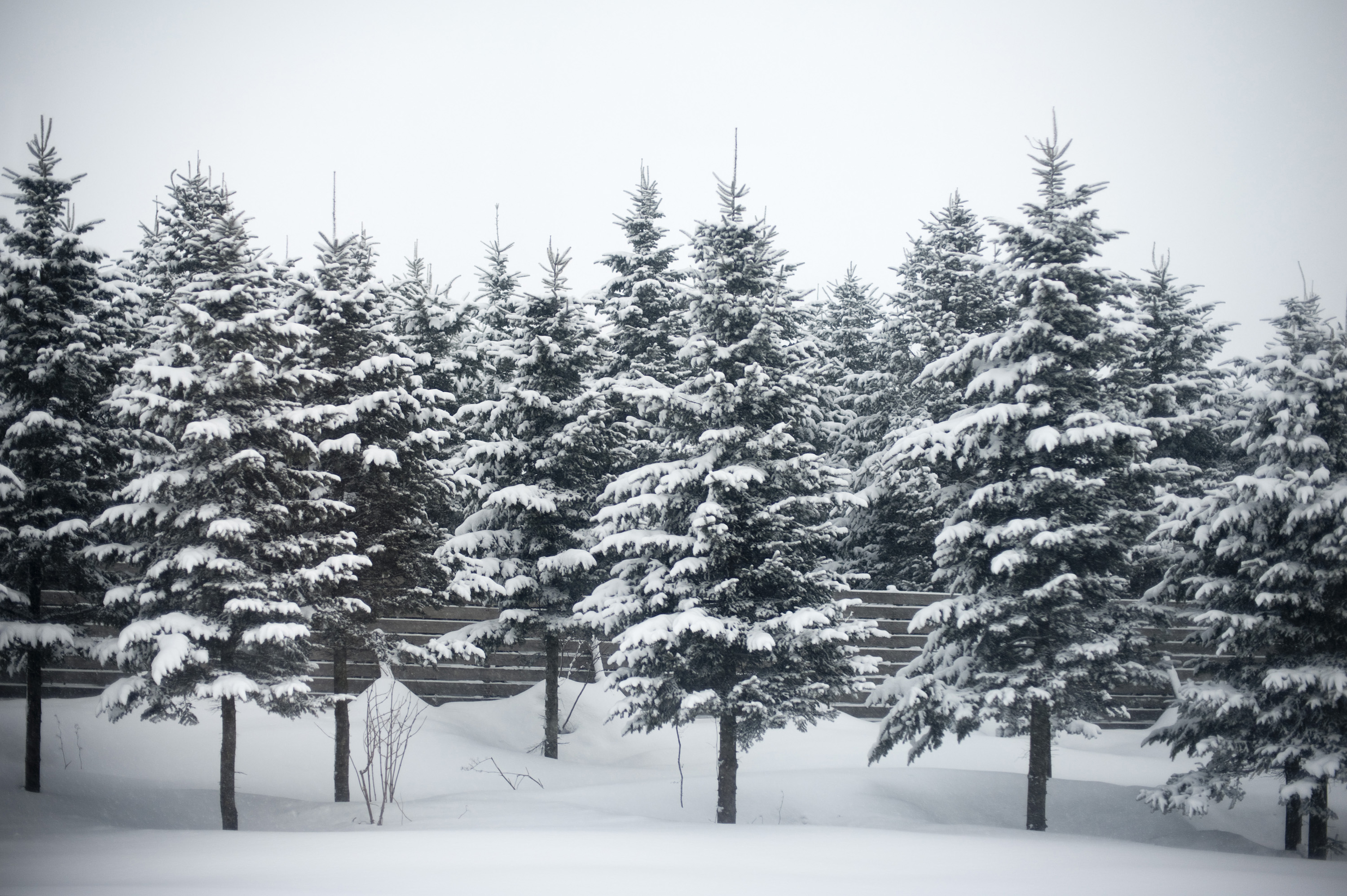 Video Game Foliage — Evergreens covered in snow. These trees use