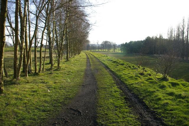 South Tyne Trail near Featherstone Rowfoot - geograph.org.uk - 408987
