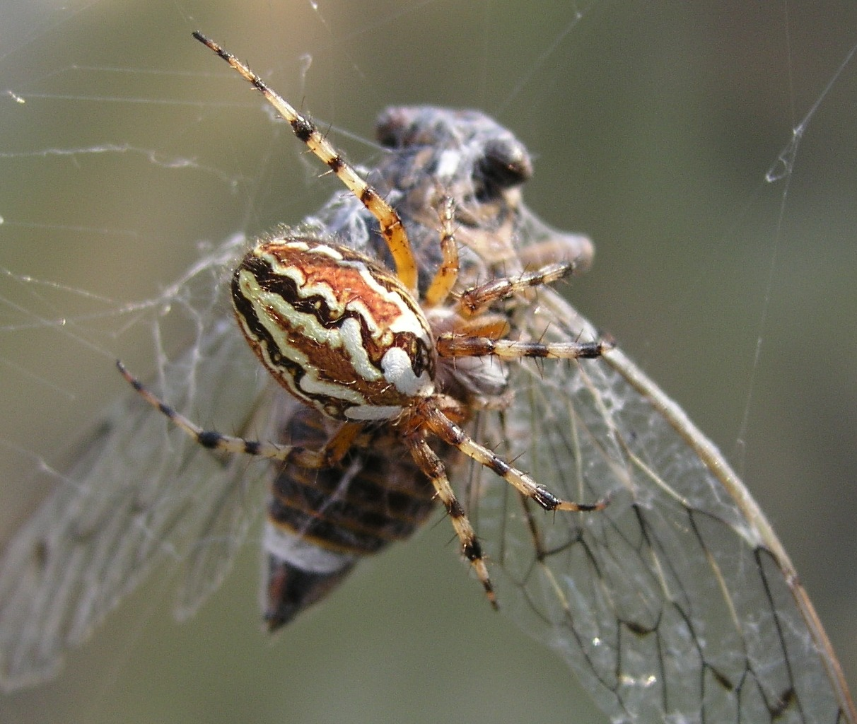 spider eaters Spiders could theoretically eat every human on that's equivalent to a 200-pound man eating 20 the washington post reached out to a spider for.