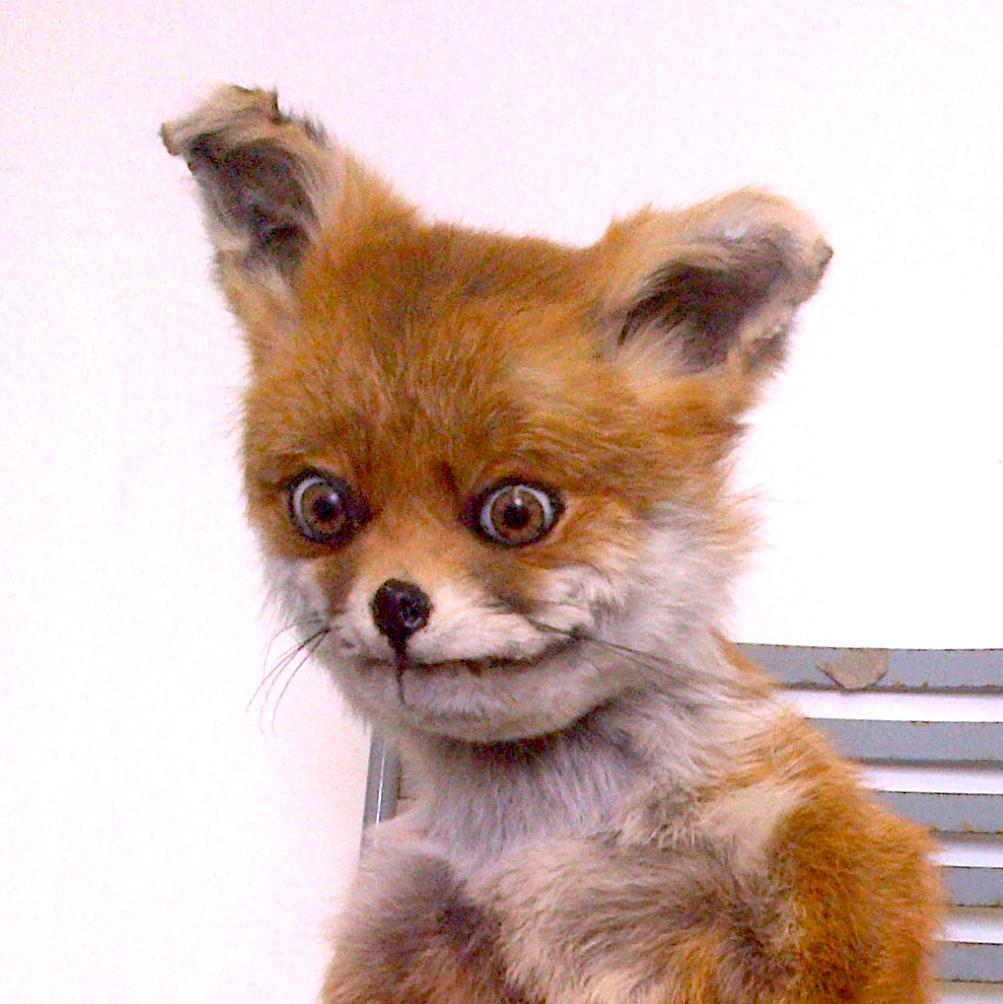 File:Stoned Fox .jpg - Wikipedia