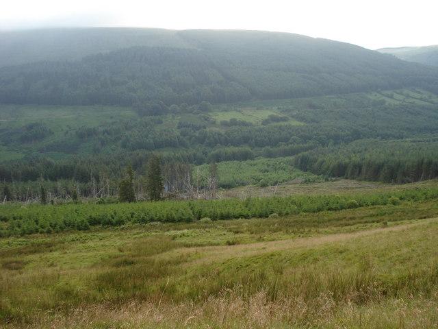 Taf Fechan forest - geograph.org.uk - 489598