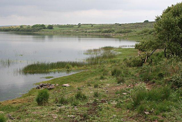 The Shoreline of Stithians Lake - geograph.org.uk - 193028