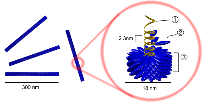 Wirus Mozaiki Tytoniowej - y_tambe, CC BY-SA 3.0
