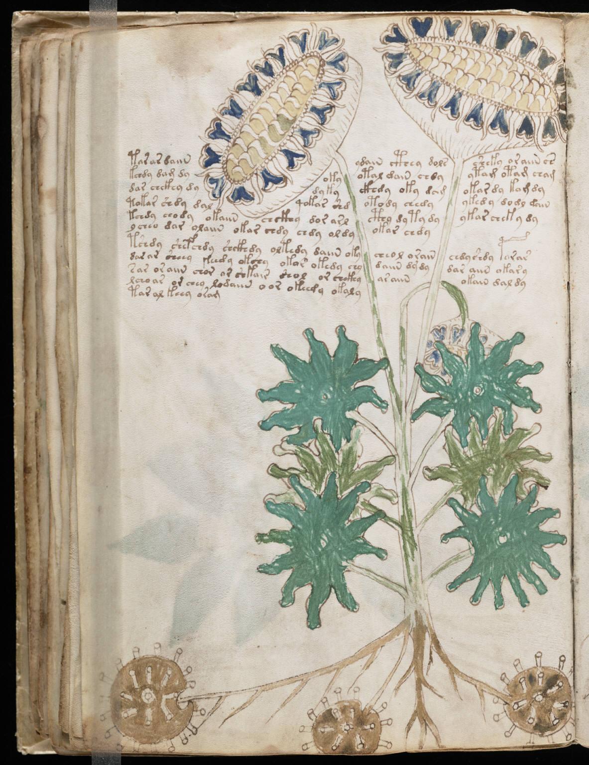 Voynich Manuscript %2866%29 ヴォイニッチ手稿(写本) どの言語にも属さない謎の文字!