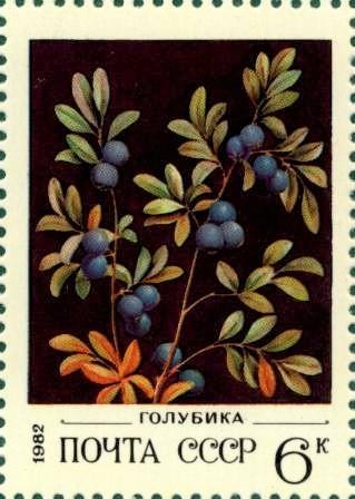 File:Почтовая марка СССР № 5274. 1982. Дикорастущие ягоды.jpg