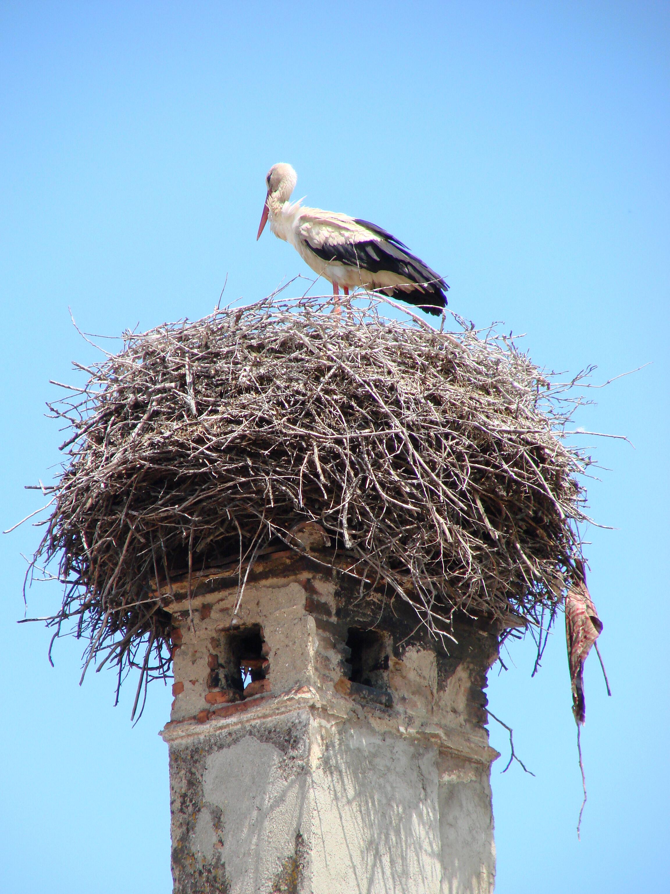 Storks Archives Litwits Workshops