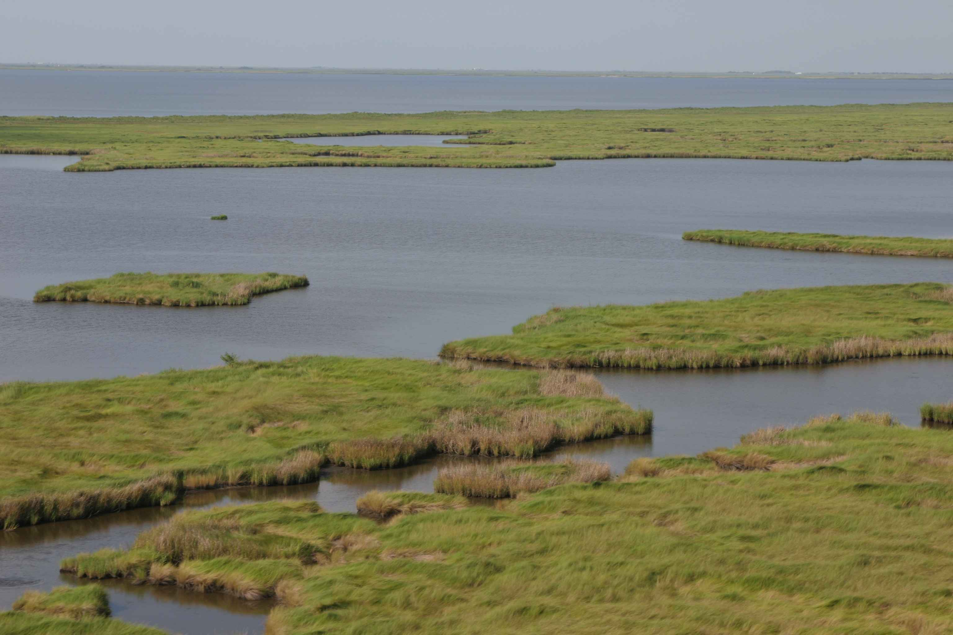 Non Tidal Wetlands Maryland Building Code