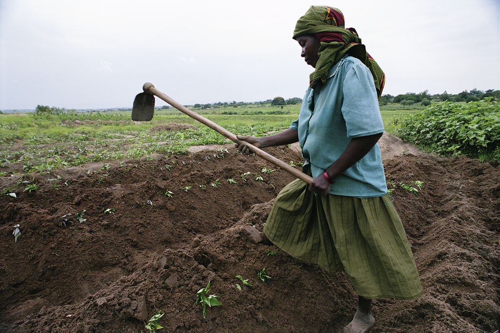 File:Africa Woman Farming a big piece of land by herself.jpg - Wikimedia  Commons