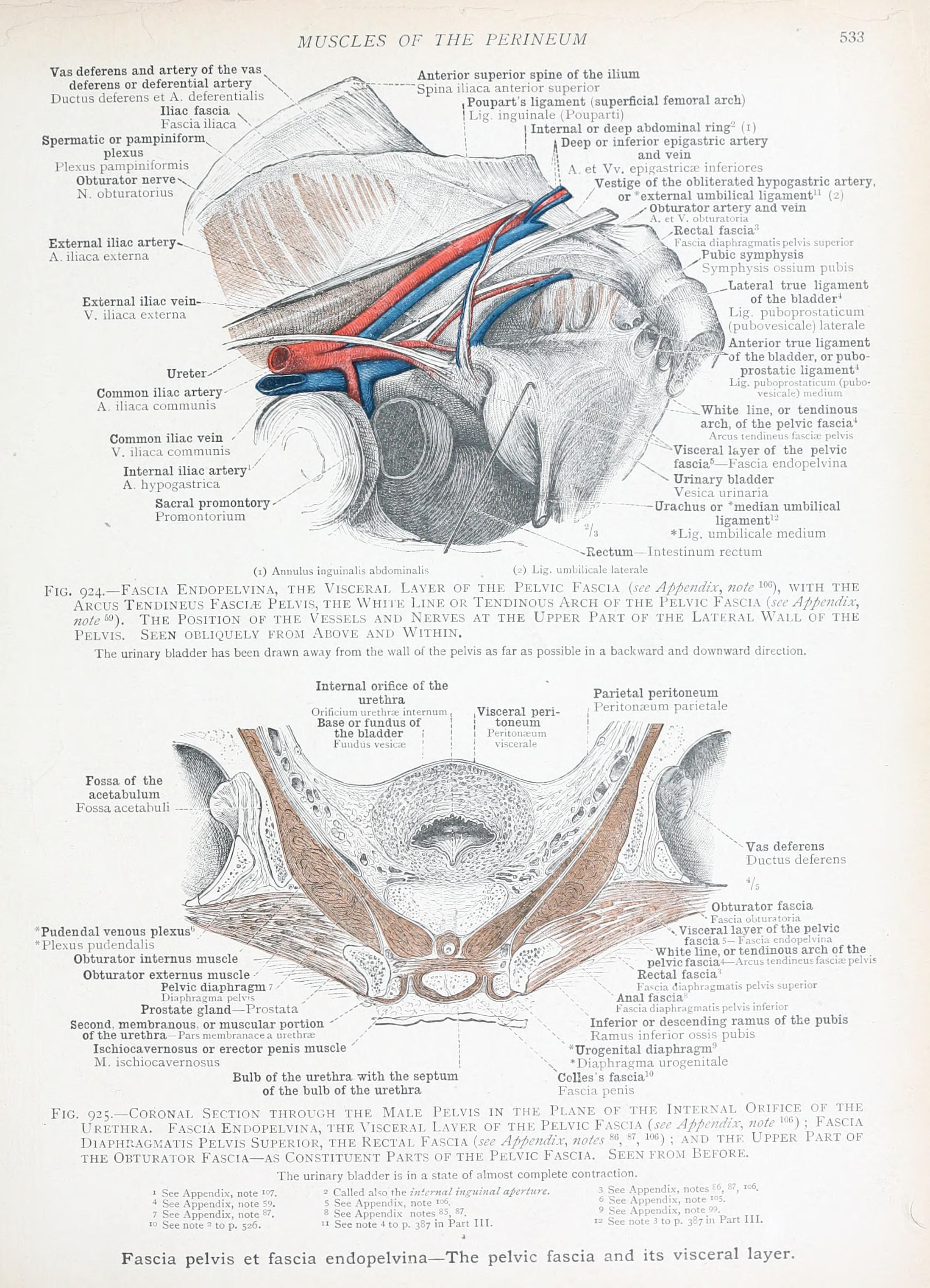 File:An atlas of human anatomy for students and physicians (1903 ...