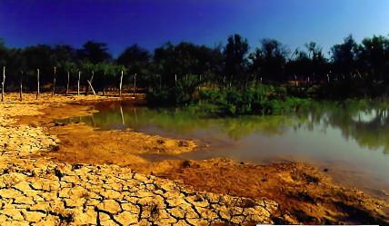 Brazilian semi-arid region.jpg