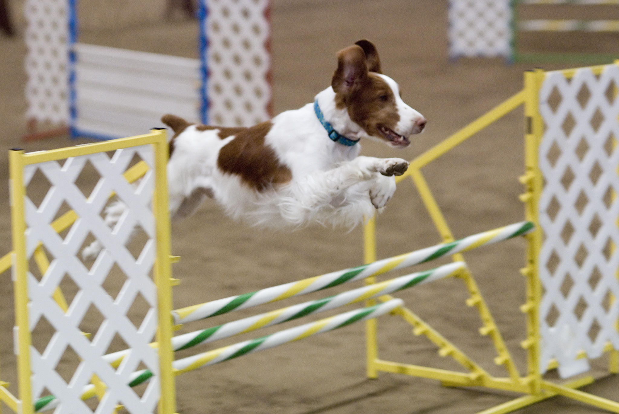 Dog Agility Jumps For Sale