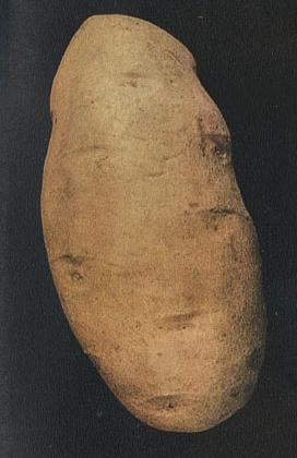 Клубень картофеля Бёрбанка, по изданию 1914года