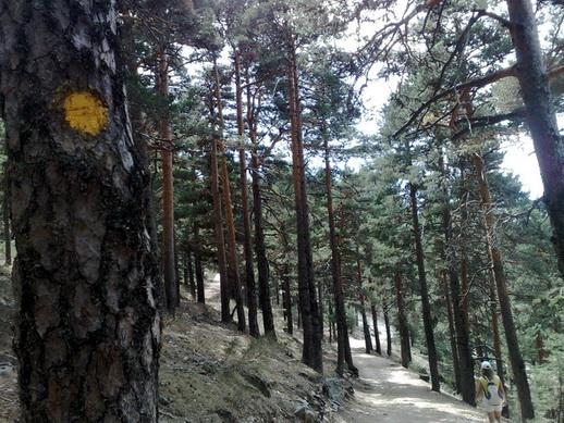 Archivo:Camino Schmidt- Señalización marcas amarillas.jpg