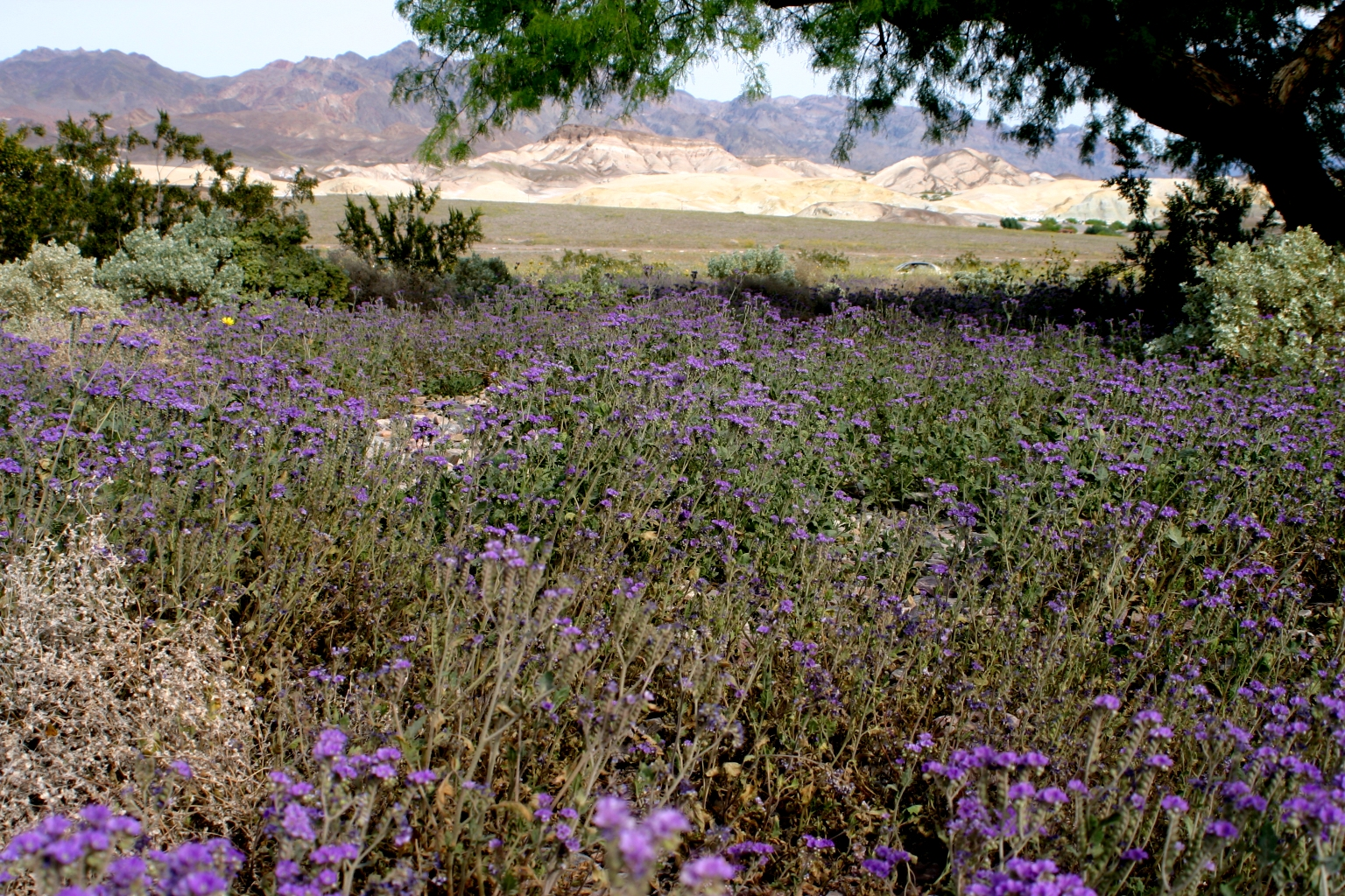 http://upload.wikimedia.org/wikipedia/commons/6/6e/Death_valley_flowers_2.jpg