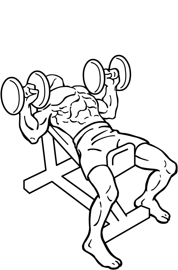 Bench Press File Dumbbell Incline Bench Press 2 Png