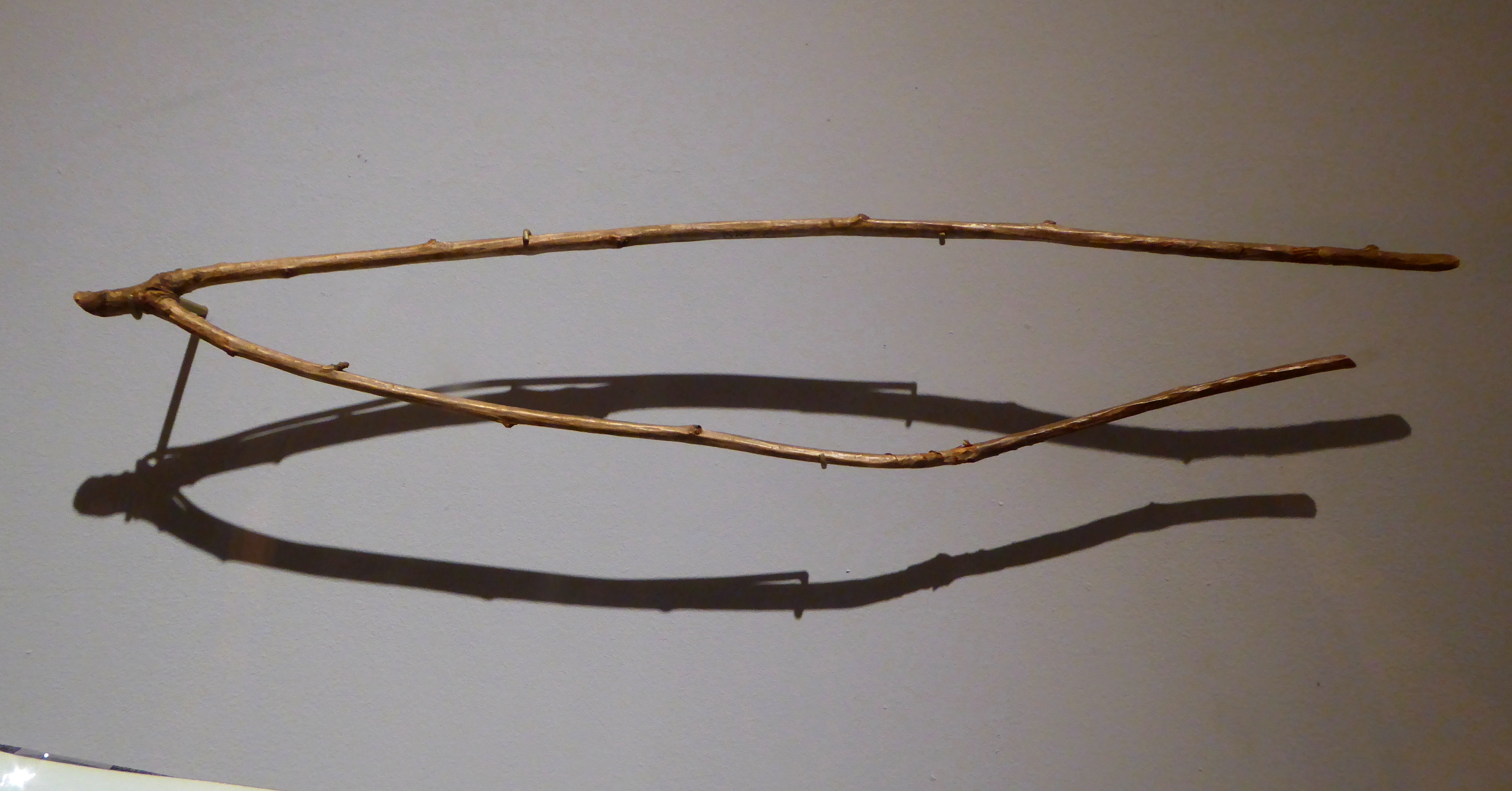 An image of a hazel dowsing rod in the Horniman Museum.