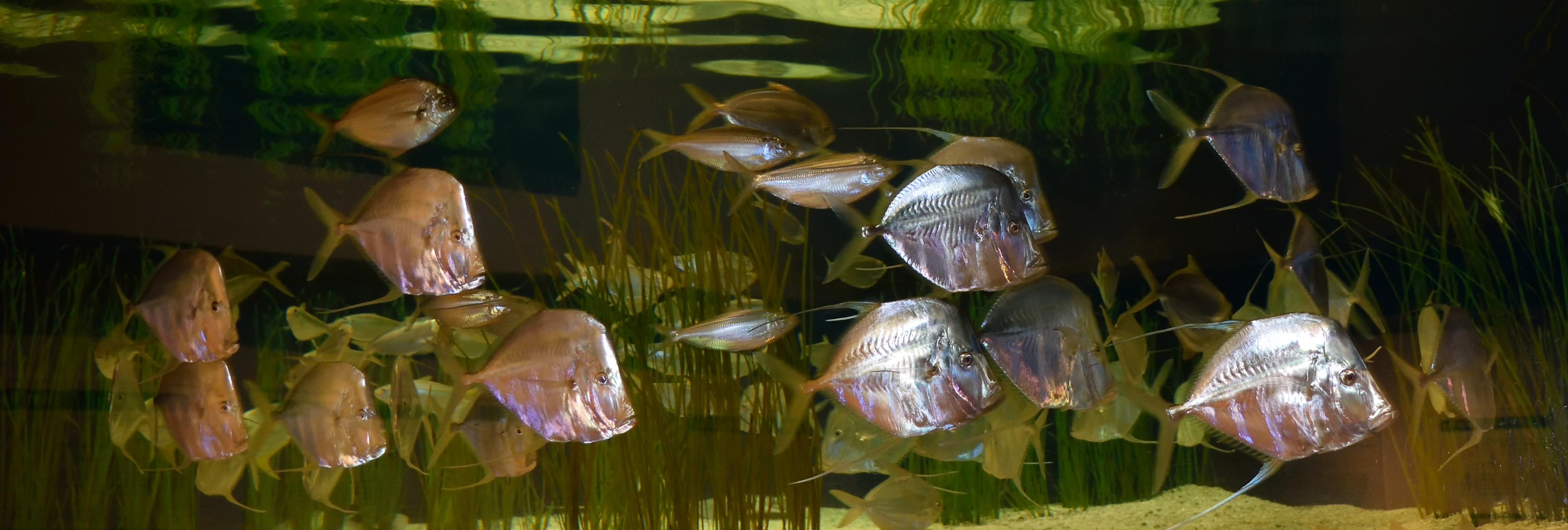 file fish exhibit exhibit at the ft fisher aquarium in carolina