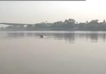 Ganga dolphin Bhagalpur.JPG