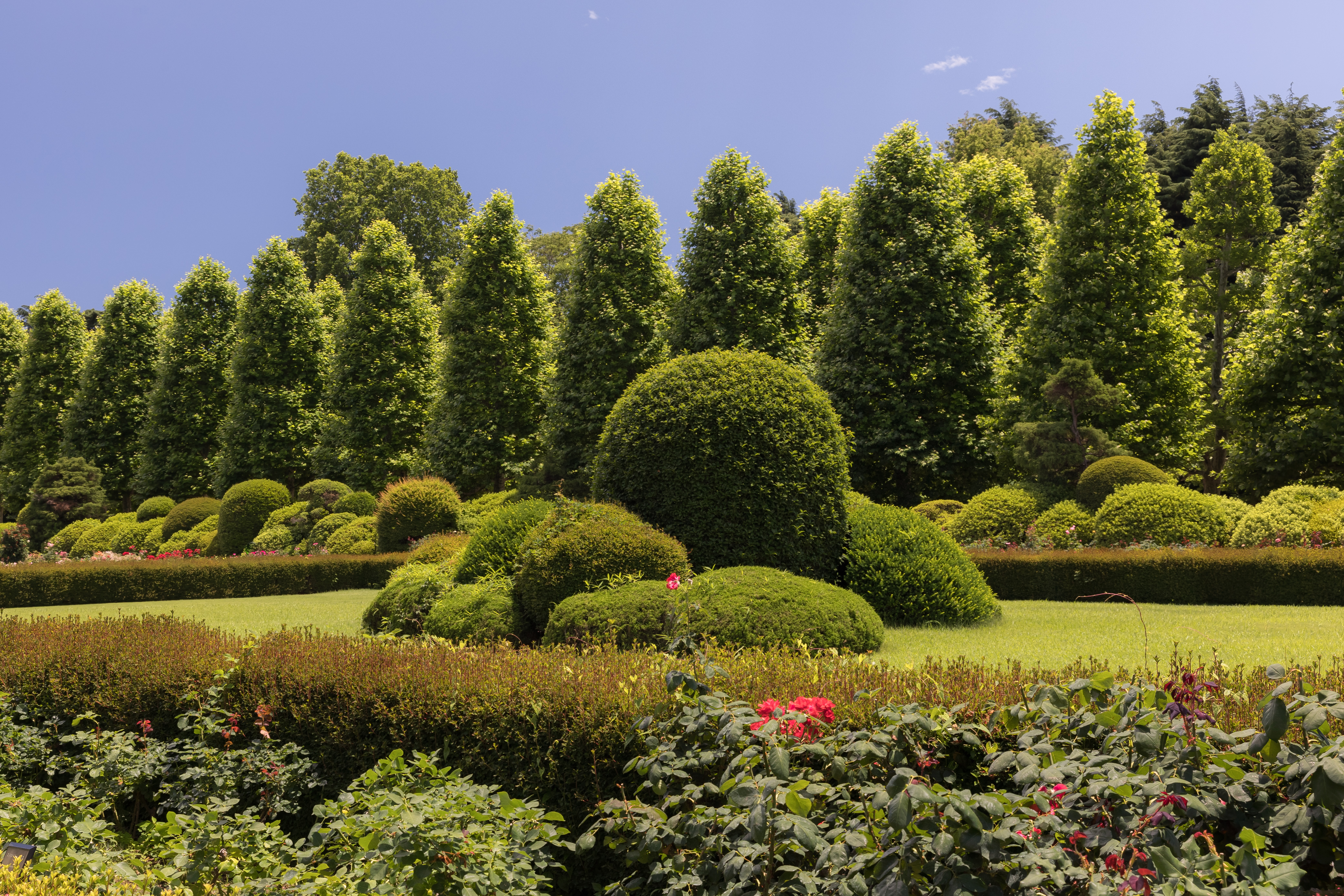 File Green Trees And Shrubs In Shinjuku Gyoen National Garden Tokyo Japan A Sunny Day With Blue Sky Jpg Wikimedia Commons
