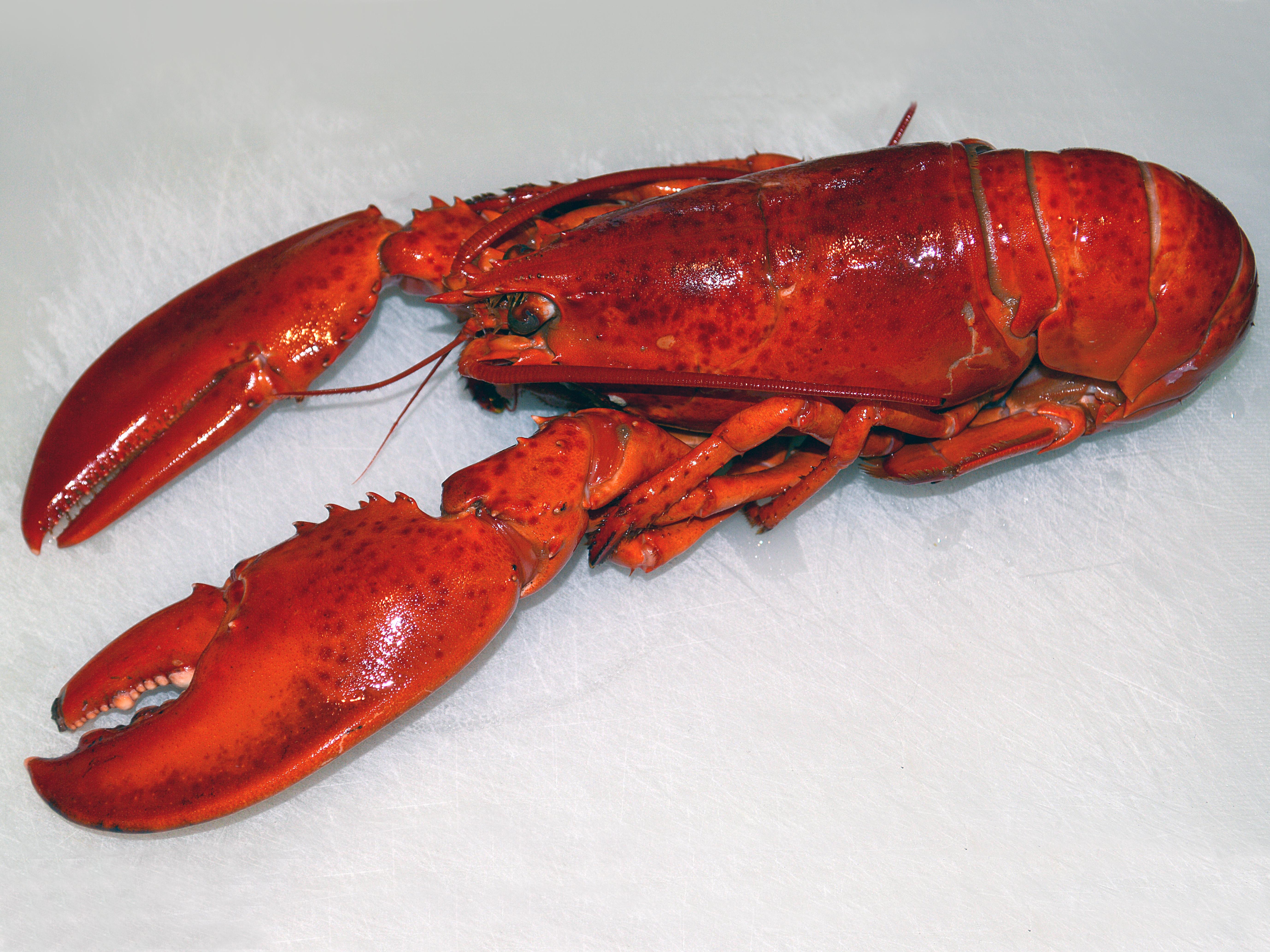 Food Lobster As Pet
