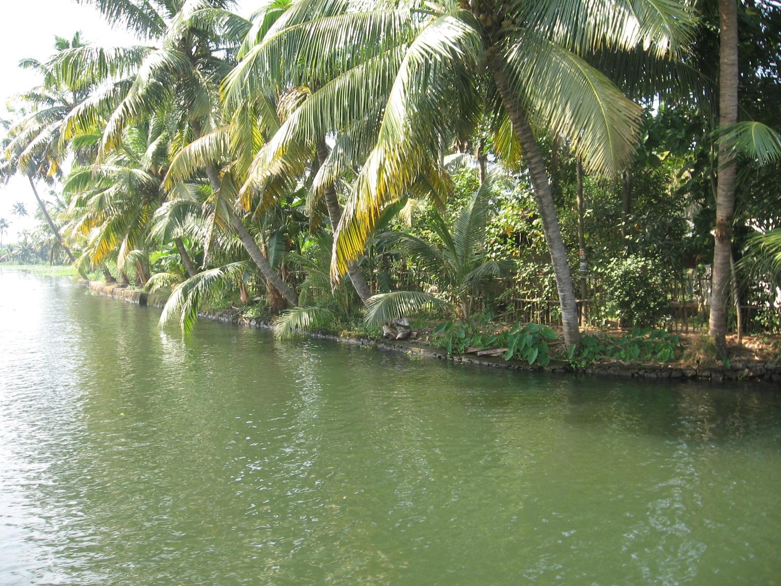 Coconut Rice Kerala Cake Recipes