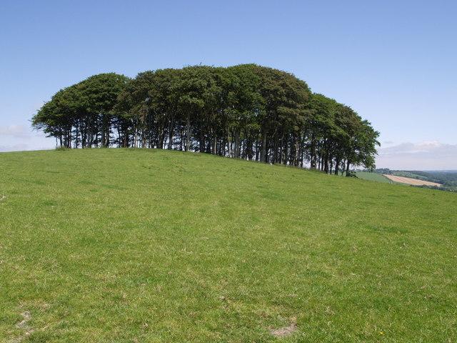 Knaphill Plantation - geograph.org.uk - 459001