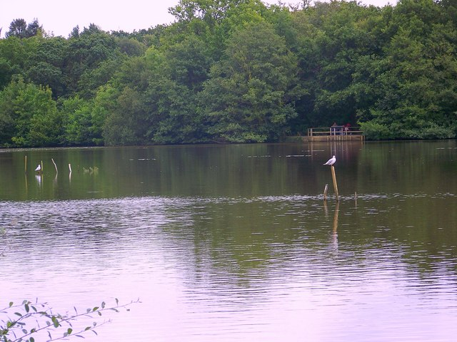 Lake, Stover Country Park - geograph.org.uk - 940718