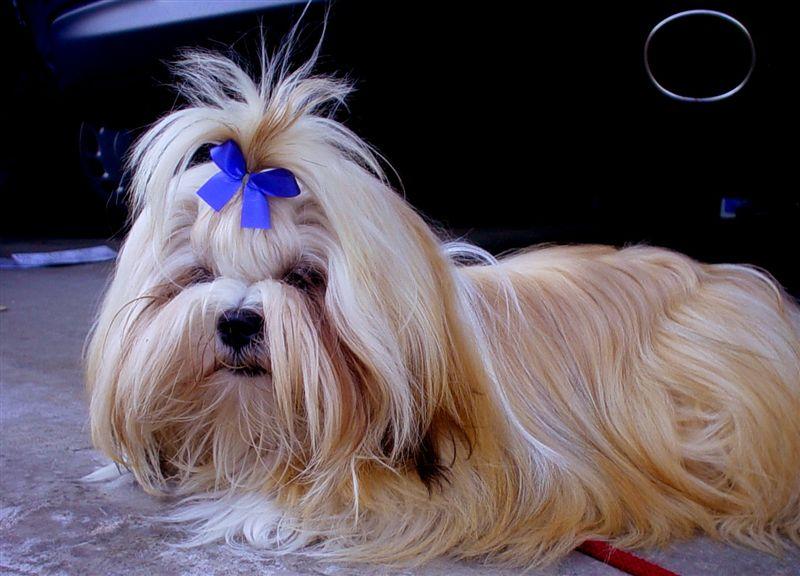 Dog Grooming Ribbon Bows