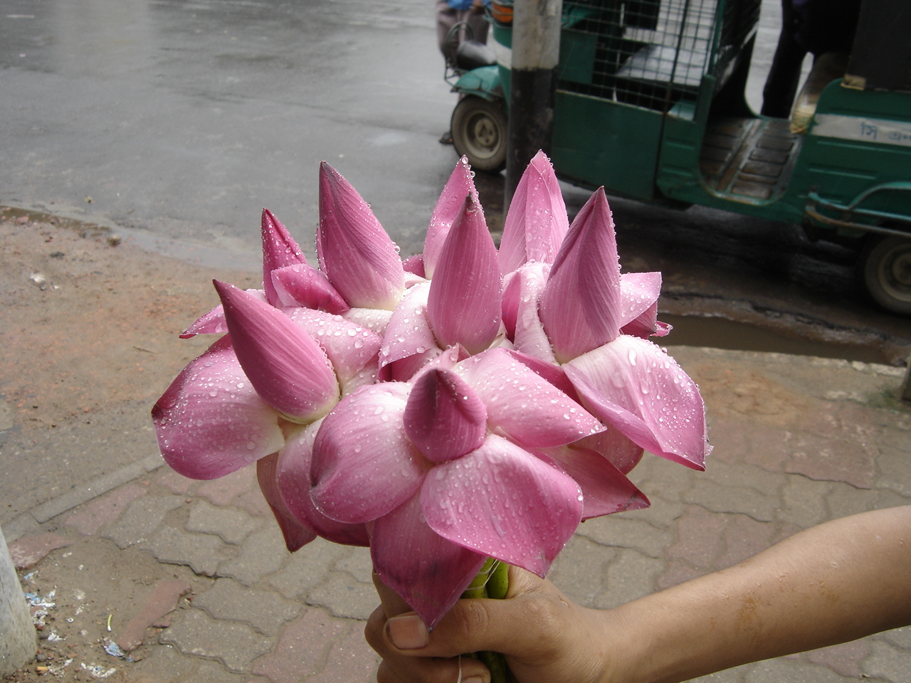 Lotus flower history - File Lotus Flower Jpg