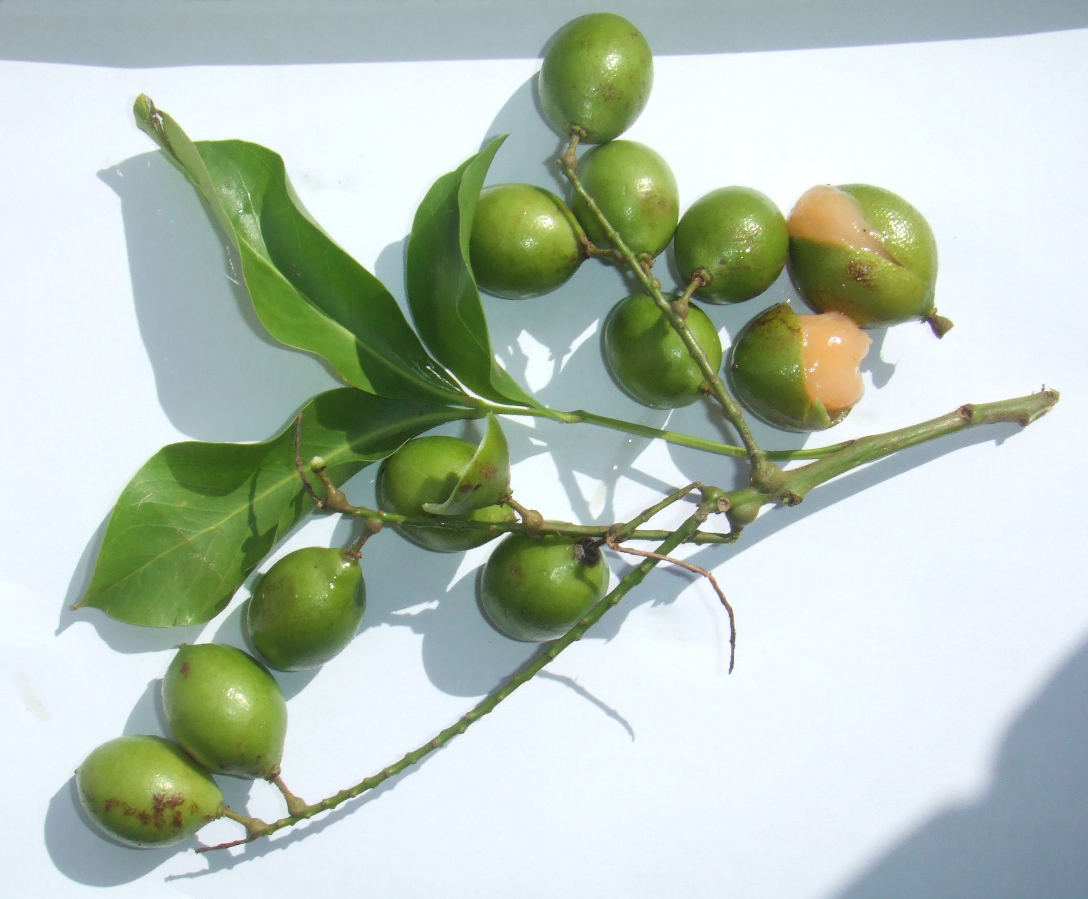 10 Fruits And Vegetables To Try From Puerto Rico