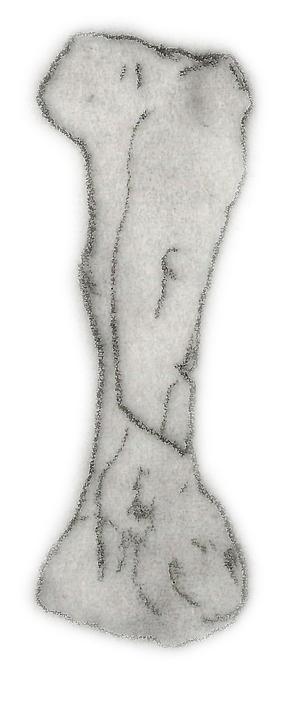 Niobrarasaurus